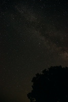 Milky Way along the edge of the trees